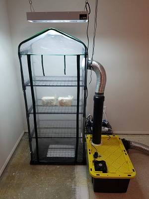 Build an Automated Mushroom Fruiting Chamber | MycoBlog